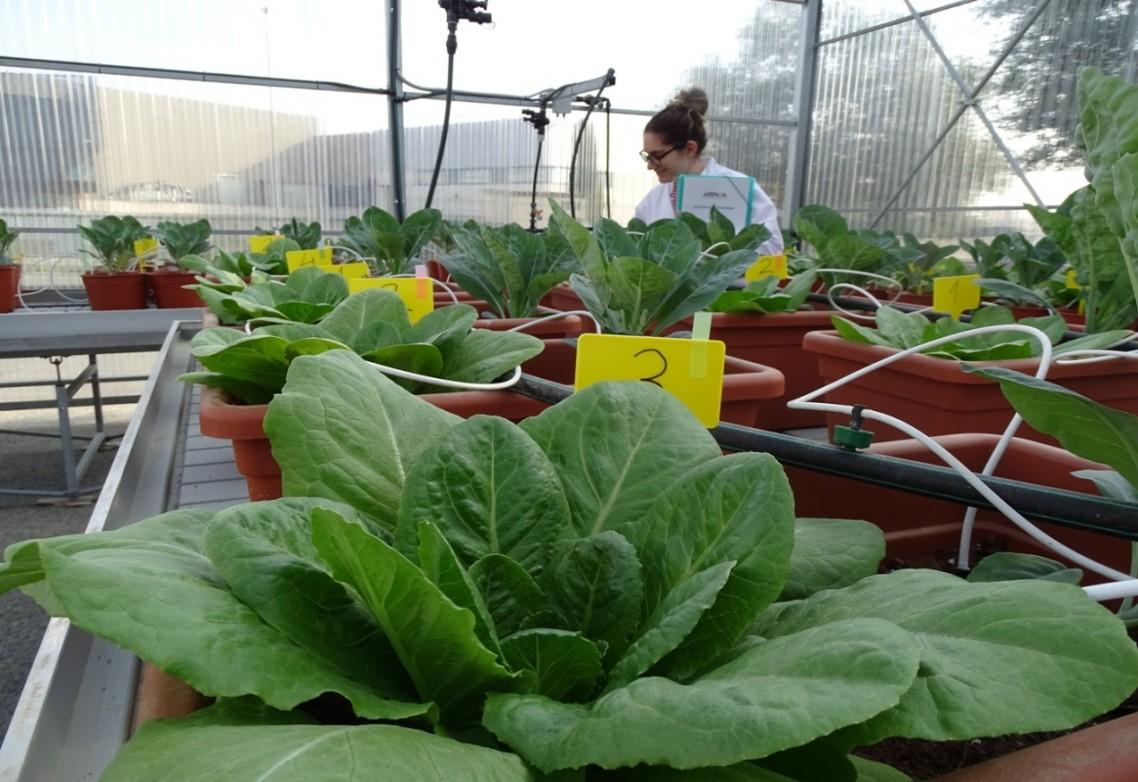 ¿Qué beneficios aporta el azufre como macronutriente en la agricultura?